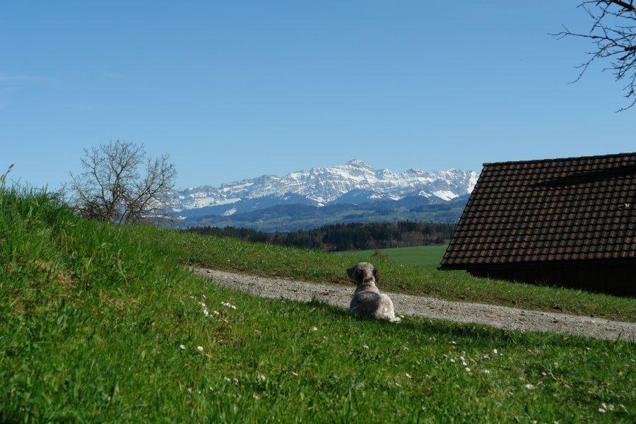 Hundewelpen Aus Der Schweiz Allerlei Vwbusforum Ch